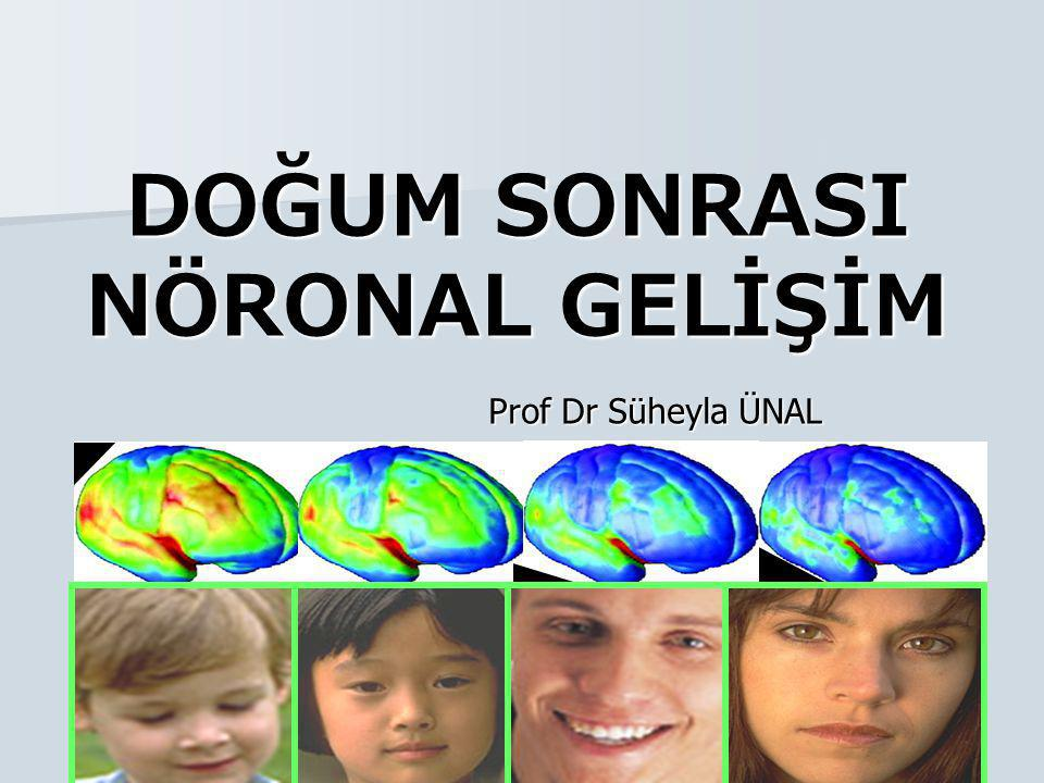 Sinaps oluşumu Conception MonthsYears AGE -6-303691481216 Sensing Pathways (vision, hearing) Language Higher Cognitive Function C.