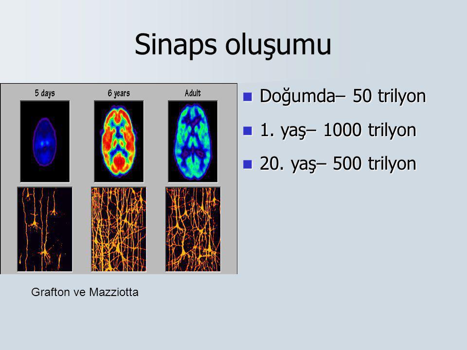 Sinaps oluşumu  Doğumda– 50 trilyon  1. yaş– 1000 trilyon  20. yaş– 500 trilyon Grafton ve Mazziotta
