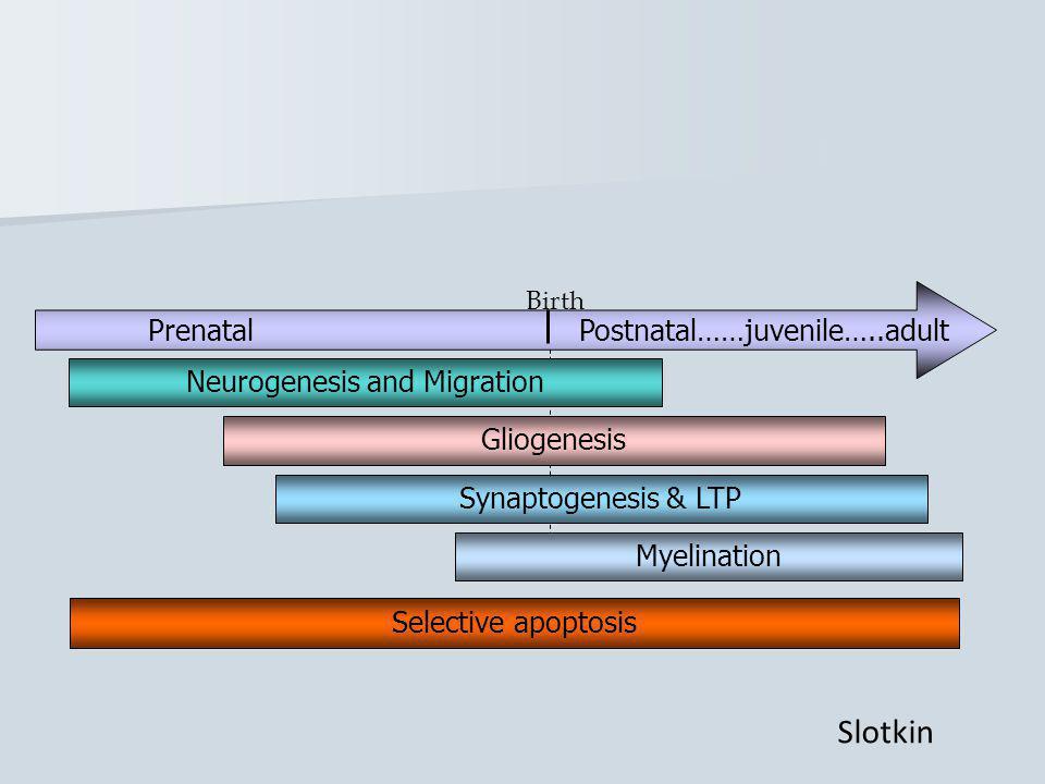 Prenatal Postnatal……juvenile…..adult Birth Neurogenesis and Migration Synaptogenesis & LTP Myelination Gliogenesis Selective apoptosis Slotkin