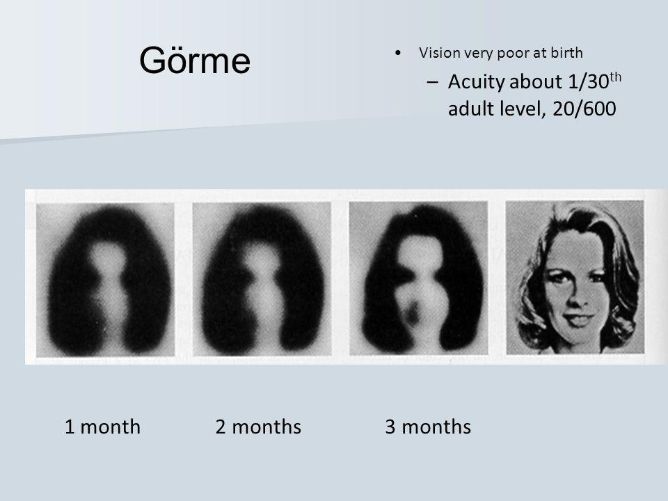 1 month 2 months 3 months •Vision very poor at birth –Acuity about 1/30 th adult level, 20/600 Görme