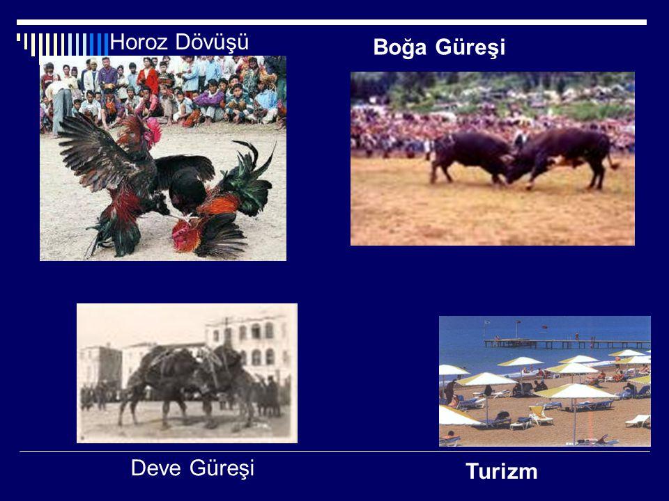 Boğa Güreşi Turizm Deve Güreşi Horoz Dövüşü