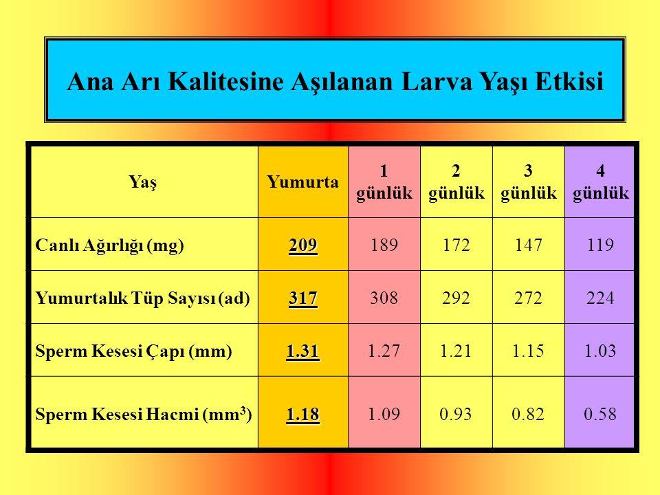 Ana Arı Kalitesine Aşılanan Larva Yaşı Etkisi YaşYumurta 1 günlük 2 günlük 3 günlük 4 günlük Canlı Ağırlığı (mg)209189172147119 Yumurtalık Tüp Sayısı