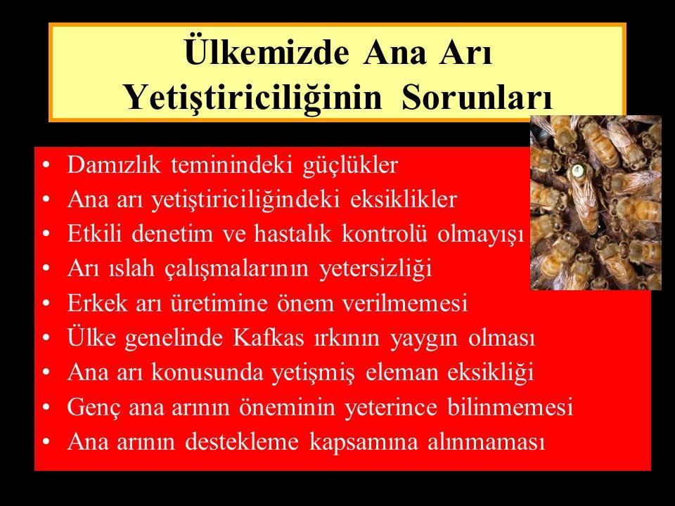 Ülkemizde Ana Arı Yetiştiriciliğinin Sorunları •Damızlık teminindeki güçlükler •Ana arı yetiştiriciliğindeki eksiklikler •Etkili denetim ve hastalık k