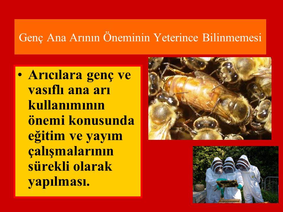 Genç Ana Arının Öneminin Yeterince Bilinmemesi •Arıcılara genç ve vasıflı ana arı kullanımının önemi konusunda eğitim ve yayım çalışmalarının sürekli