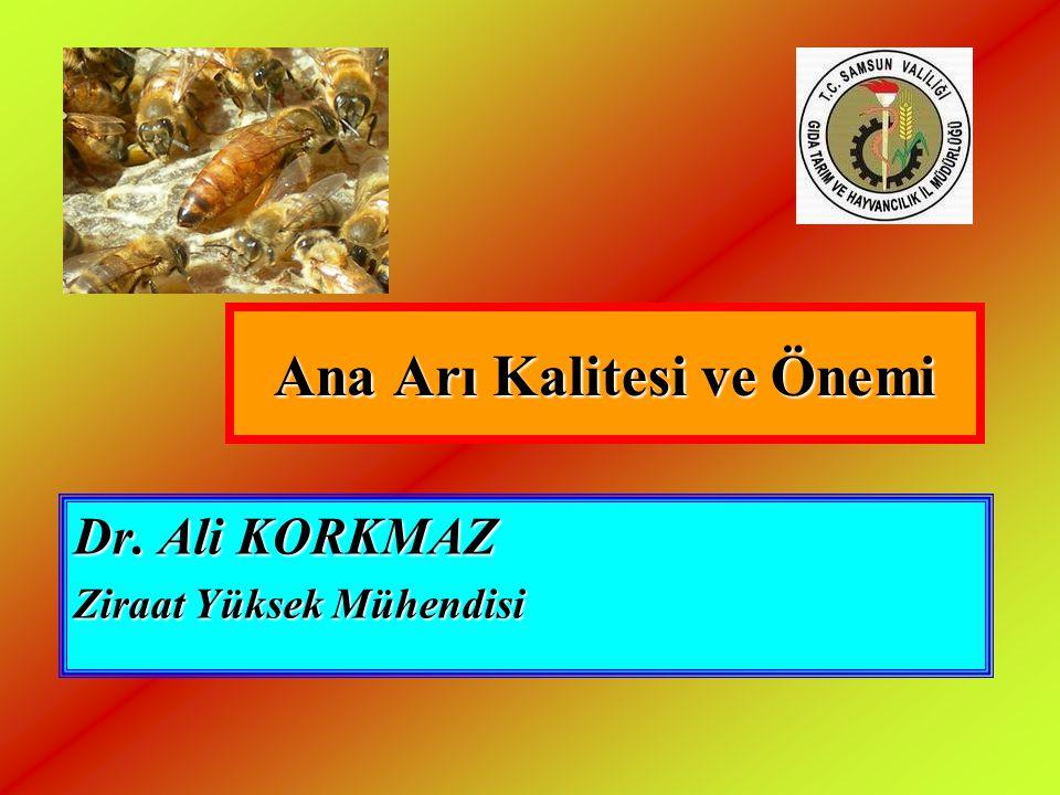 Ana Arı Kalitesi ve Önemi Dr. Ali KORKMAZ Ziraat Yüksek Mühendisi