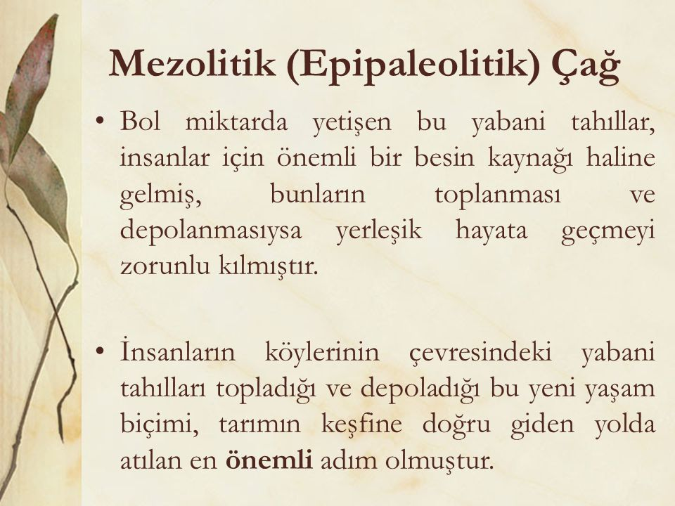 Mezolitik (Epipaleolitik) Çağ •Bol miktarda yetişen bu yabani tahıllar, insanlar için önemli bir besin kaynağı haline gelmiş, bunların toplanması ve d