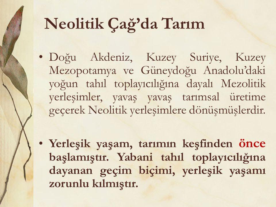 Neolitik Çağ'da Tarım •Doğu Akdeniz, Kuzey Suriye, Kuzey Mezopotamya ve Güneydoğu Anadolu'daki yoğun tahıl toplayıcılığına dayalı Mezolitik yerleşimle