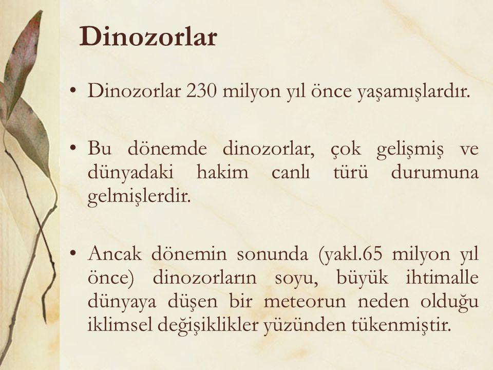 Dinozorlar •Dinozorlar 230 milyon yıl önce yaşamışlardır. •Bu dönemde dinozorlar, çok gelişmiş ve dünyadaki hakim canlı türü durumuna gelmişlerdir. •A
