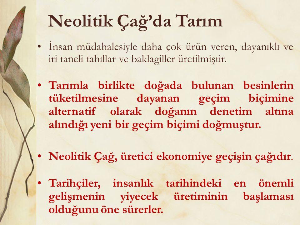 Neolitik Çağ'da Tarım •İnsan müdahalesiyle daha çok ürün veren, dayanıklı ve iri taneli tahıllar ve baklagiller üretilmiştir. •Tarımla birlikte doğada