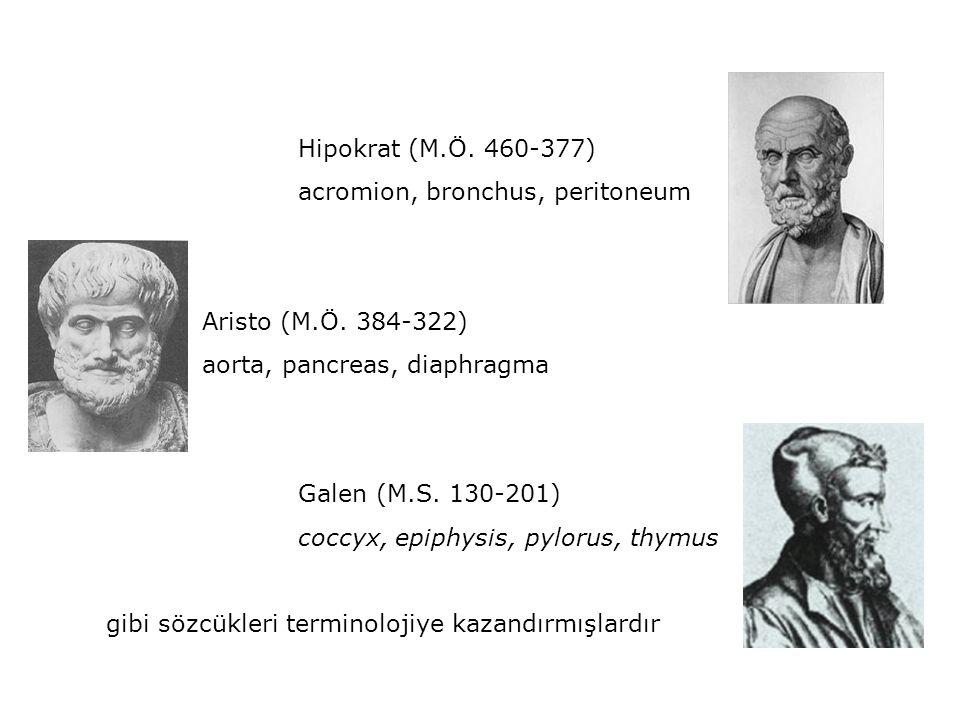 Hipokrat (M.Ö. 460-377) acromion, bronchus, peritoneum Aristo (M.Ö. 384-322) aorta, pancreas, diaphragma Galen (M.S. 130-201) coccyx, epiphysis, pylor