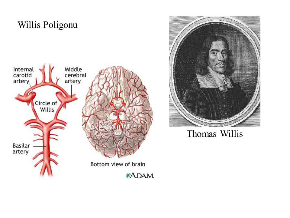 Willis Poligonu Thomas Willis