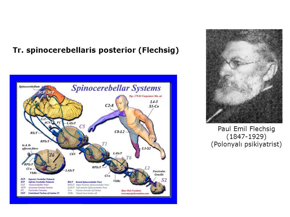 Tr. spinocerebellaris posterior (Flechsig) Paul Emil Flechsig (1847-1929) (Polonyalı psikiyatrist)