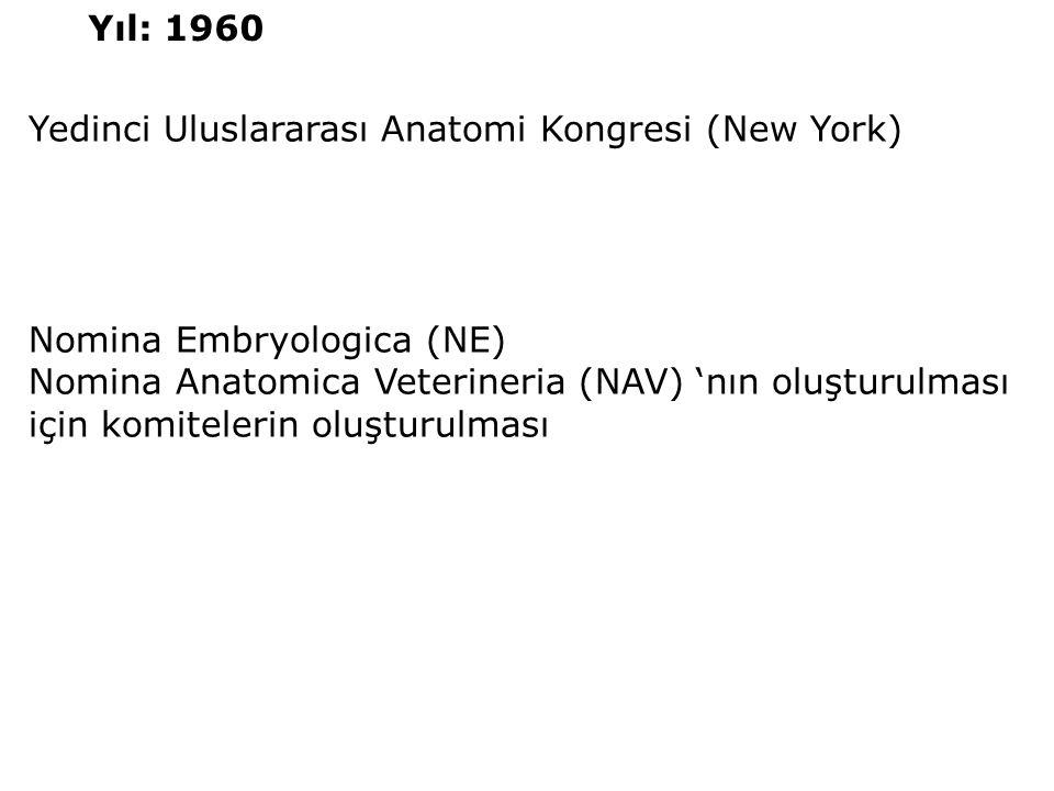 Yedinci Uluslararası Anatomi Kongresi (New York) Nomina Embryologica (NE) Nomina Anatomica Veterineria (NAV) 'nın oluşturulması için komitelerin oluşt