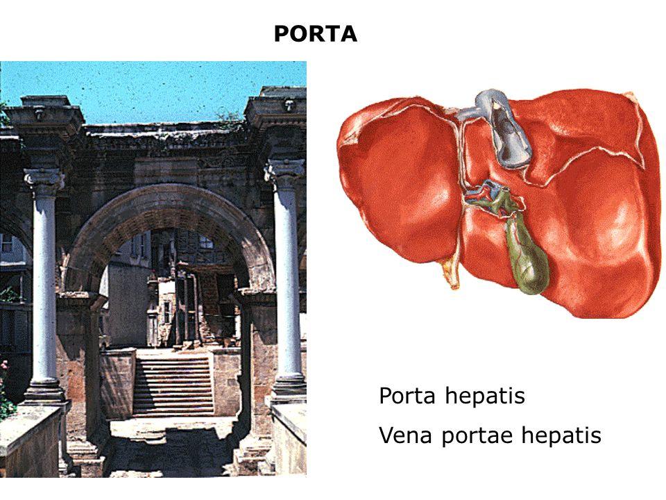 PORTA Porta hepatis Vena portae hepatis