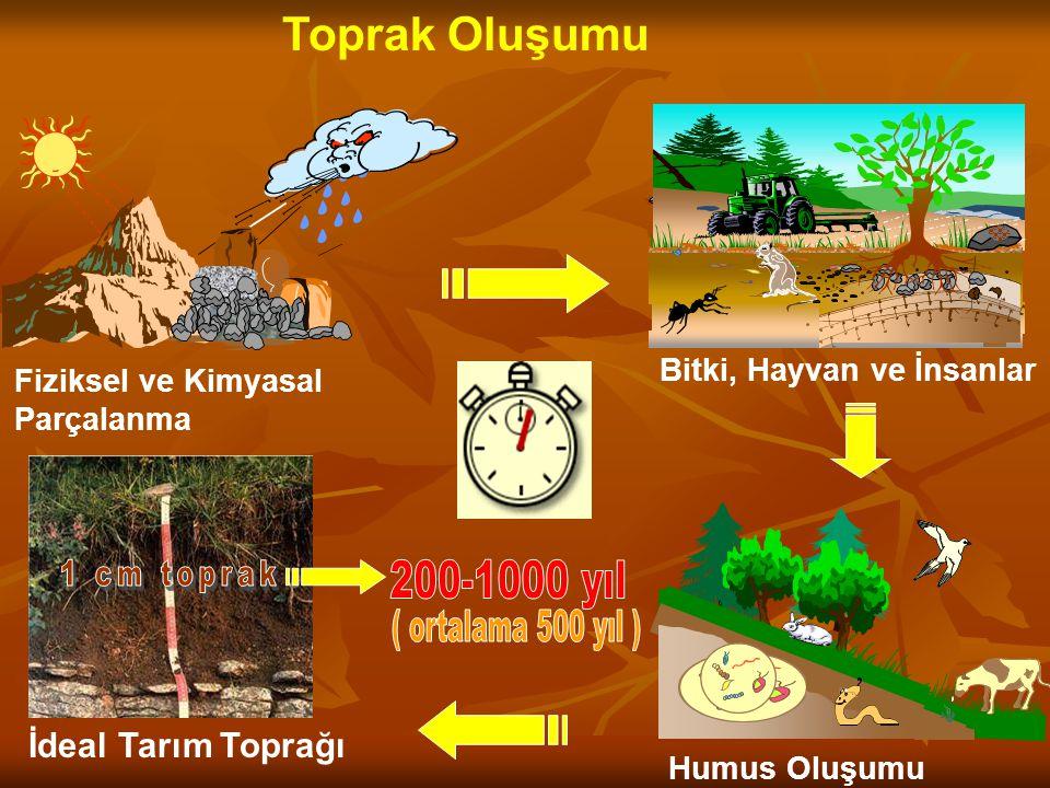 Toprak Oluşumu Fiziksel ve Kimyasal Parçalanma Bitki, Hayvan ve İnsanlar Orman İdeal Tarım Toprağı Humus Oluşumu