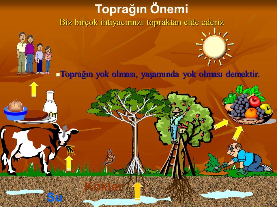 Toprağın Önemi Biz birçok ihtiyacımızı topraktan elde ederiz Kökler Su  Toprağın yok olması, yaşamında yok olması demektir.