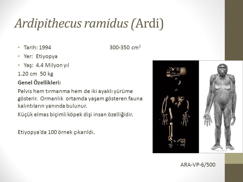 Ardipithecus ramidus (Ardi) • Tarih: 1994 300-350 cm 3 • Yer: Etiyopya • Yaş: 4.4 Milyon yıl 1.20 cm 50 kg Genel Özellikleri: Pelvis hem tırmanma hem de iki ayaklı yürüme gösterir.