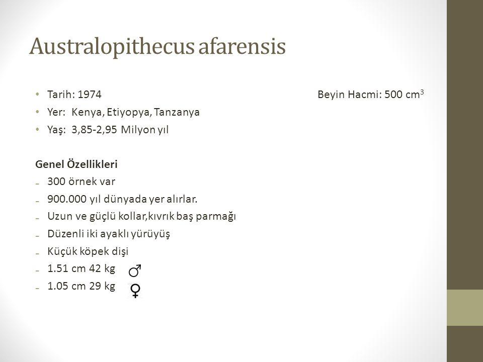 Australopithecus afarensis • Tarih: 1974 Beyin Hacmi: 500 cm 3 • Yer: Kenya, Etiyopya, Tanzanya • Yaş: 3,85-2,95 Milyon yıl Genel Özellikleri ₋300 örnek var ₋900.000 yıl dünyada yer alırlar.