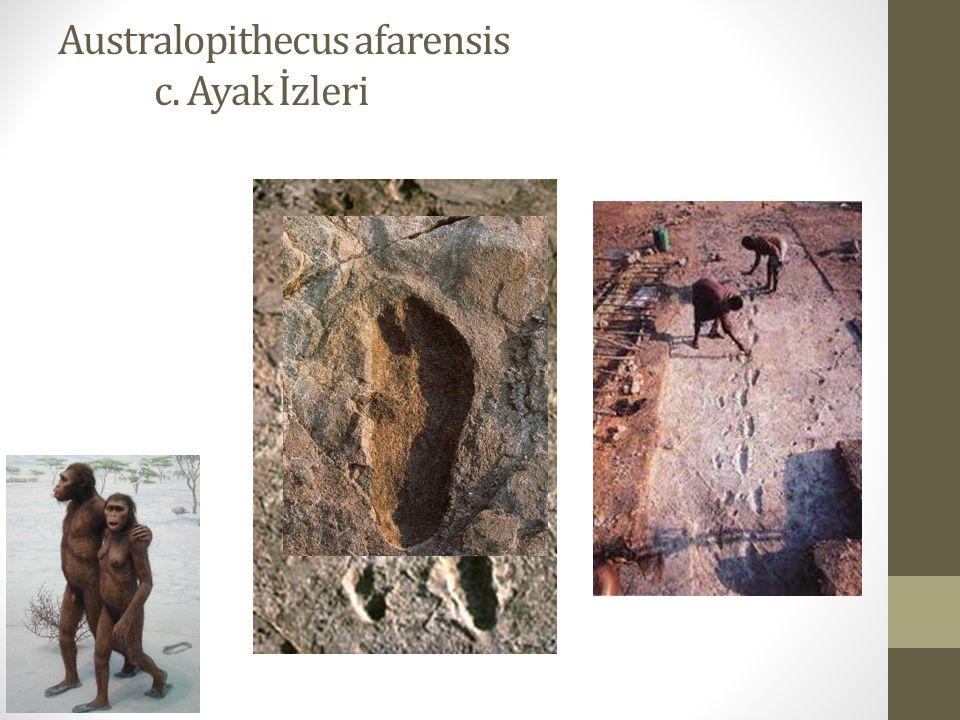 Australopithecus afarensis c. Ayak İzleri