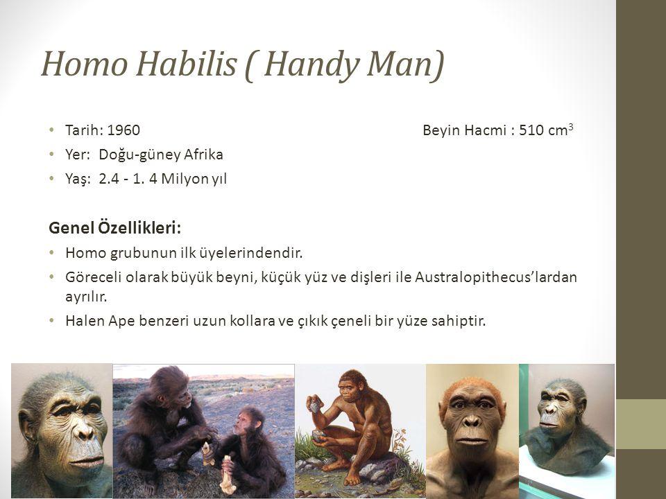 Homo Habilis ( Handy Man) • Tarih: 1960 Beyin Hacmi : 510 cm 3 • Yer: Doğu-güney Afrika • Yaş: 2.4 - 1.
