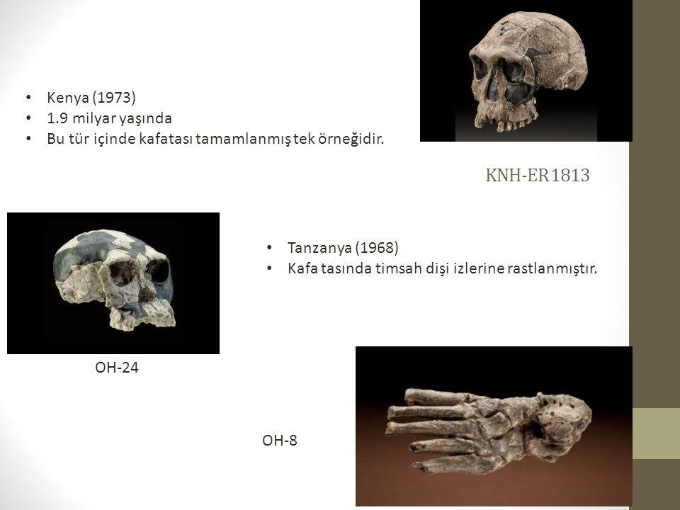 KNH-ER 1813 • Kenya (1973) • 1.9 milyar yaşında • Bu tür içinde kafatası tamamlanmış tek örneğidir.