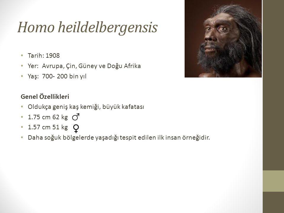 Homo heildelbergensis • Tarih: 1908 • Yer: Avrupa, Çin, Güney ve Doğu Afrika • Yaş: 700- 200 bin yıl Genel Özellikleri • Oldukça geniş kaş kemiği, büyük kafatası • 1.75 cm 62 kg • 1.57 cm 51 kg • Daha soğuk bölgelerde yaşadığı tespit edilen ilk insan örneğidir.