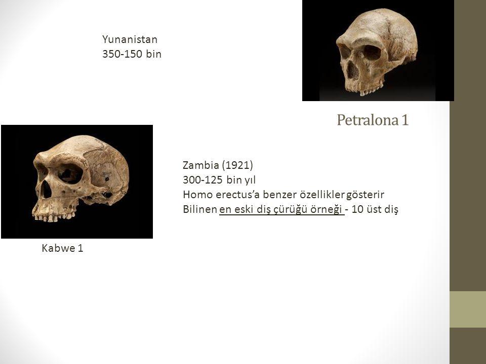 Petralona 1 Yunanistan 350-150 bin Kabwe 1 Zambia (1921) 300-125 bin yıl Homo erectus'a benzer özellikler gösterir Bilinen en eski diş çürüğü örneği - 10 üst diş