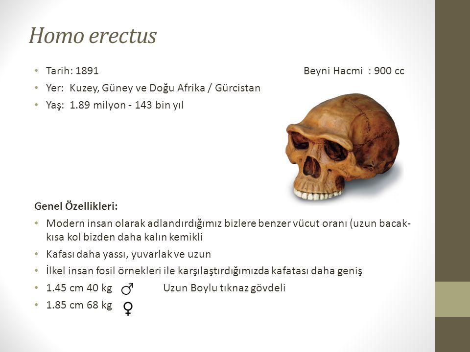 Homo erectus • Tarih: 1891 Beyni Hacmi : 900 cc • Yer: Kuzey, Güney ve Doğu Afrika / Gürcistan • Yaş: 1.89 milyon - 143 bin yıl Genel Özellikleri: • Modern insan olarak adlandırdığımız bizlere benzer vücut oranı (uzun bacak- kısa kol bizden daha kalın kemikli • Kafası daha yassı, yuvarlak ve uzun • İlkel insan fosil örnekleri ile karşılaştırdığımızda kafatası daha geniş • 1.45 cm 40 kg Uzun Boylu tıknaz gövdeli • 1.85 cm 68 kg