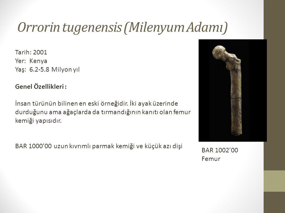 Orrorin tugenensis (Milenyum Adamı) Tarih: 2001 Yer: Kenya Yaş: 6.2-5.8 Milyon yıl Genel Özellikleri : İnsan türünün bilinen en eski örneğidir.