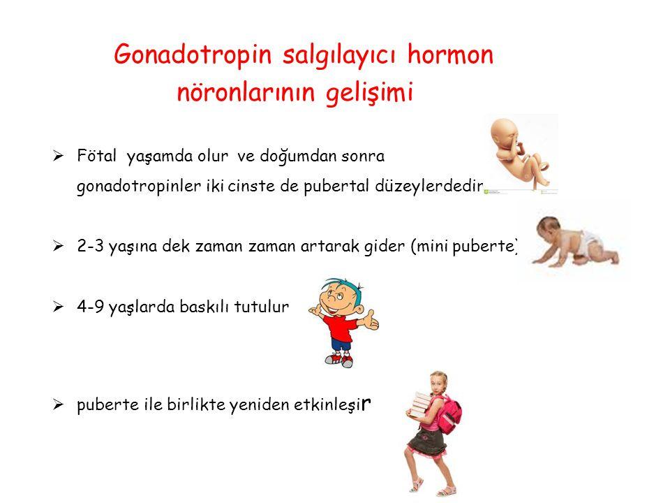Gonadotropin salgılayıcı hormon nöronlarının gelişimi  Fötal yaşamda olur ve doğumdan sonra gonadotropinler iki cinste de pubertal düzeylerdedir  2-