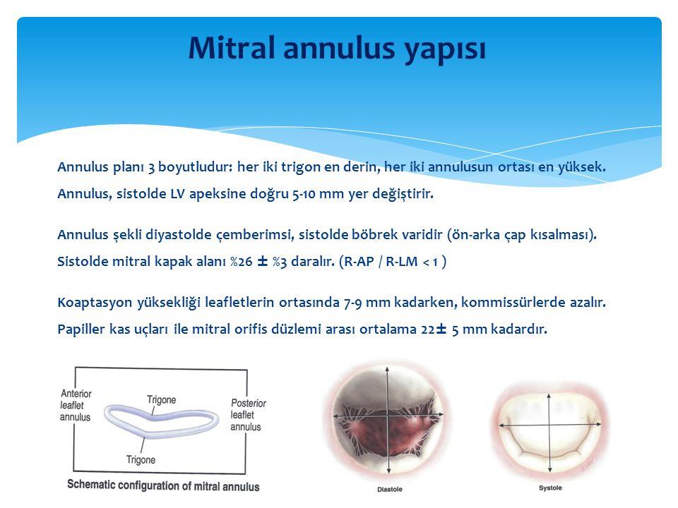 Mitral annulus yapısı Annulus planı 3 boyutludur: her iki trigon en derin, her iki annulusun ortası en yüksek. Annulus, sistolde LV apeksine doğru 5-1