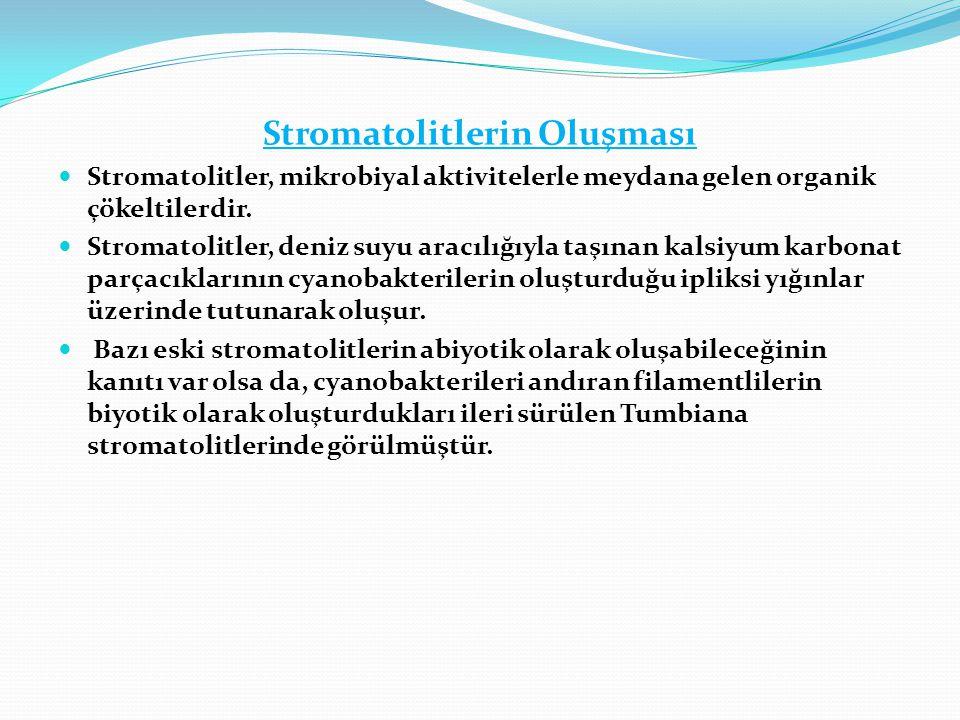 Stromatolitlerin Oluşması  Stromatolitler, mikrobiyal aktivitelerle meydana gelen organik çökeltilerdir.  Stromatolitler, deniz suyu aracılığıyla ta