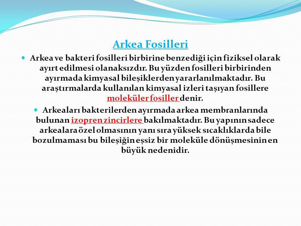 Arkea Fosilleri  Arkea ve bakteri fosilleri birbirine benzediği için fiziksel olarak ayırt edilmesi olanaksızdır. Bu yüzden fosilleri birbirinden ayı