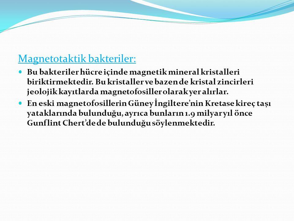 Magnetotaktik bakteriler:  Bu bakteriler hücre içinde magnetik mineral kristalleri biriktirmektedir. Bu kristaller ve bazen de kristal zincirleri jeo