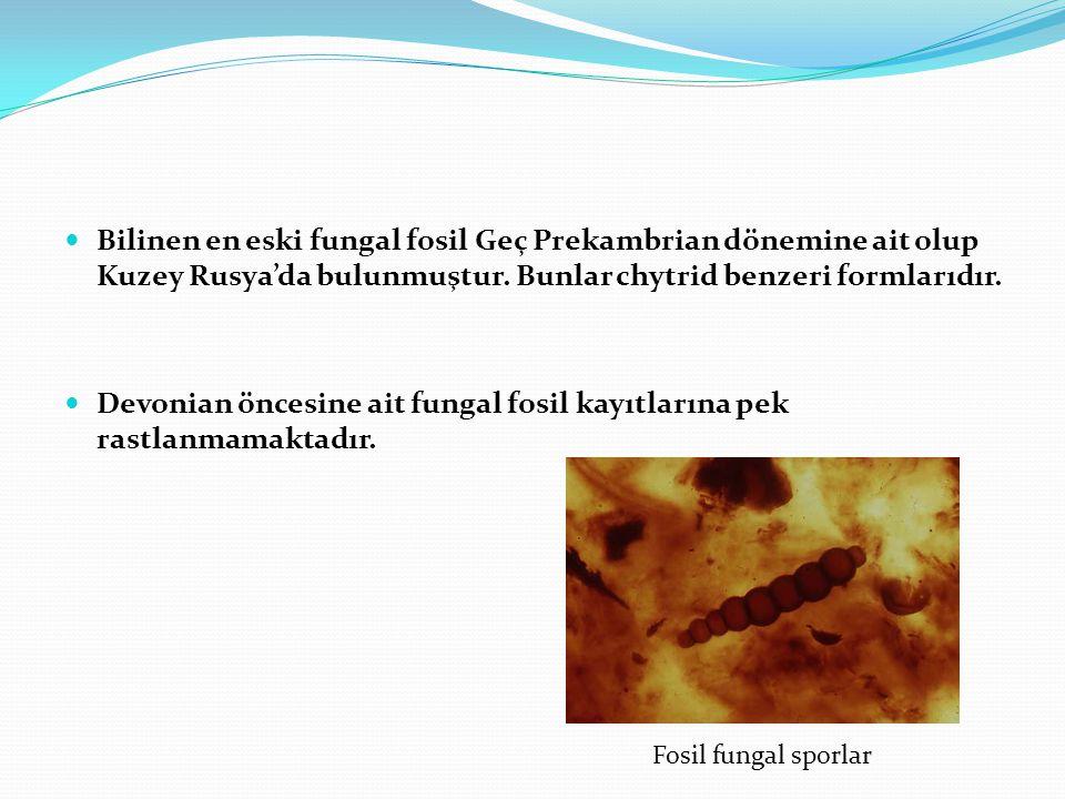  Bilinen en eski fungal fosil Geç Prekambrian dönemine ait olup Kuzey Rusya'da bulunmuştur. Bunlar chytrid benzeri formlarıdır.  Devonian öncesine a