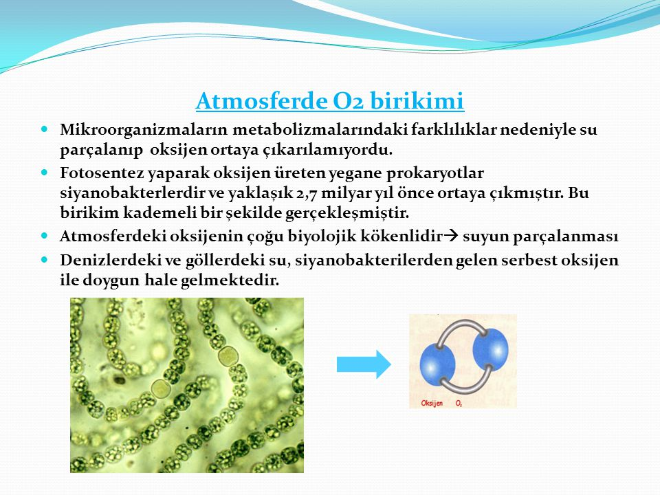 Atmosferde O2 birikimi  Mikroorganizmaların metabolizmalarındaki farklılıklar nedeniyle su parçalanıp oksijen ortaya çıkarılamıyordu.  Fotosentez ya