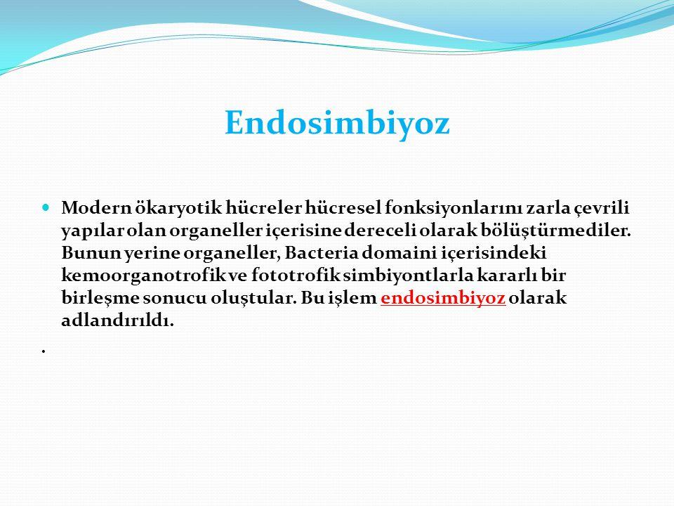 Endosimbiyoz  Modern ökaryotik hücreler hücresel fonksiyonlarını zarla çevrili yapılar olan organeller içerisine dereceli olarak bölüştürmediler. Bun