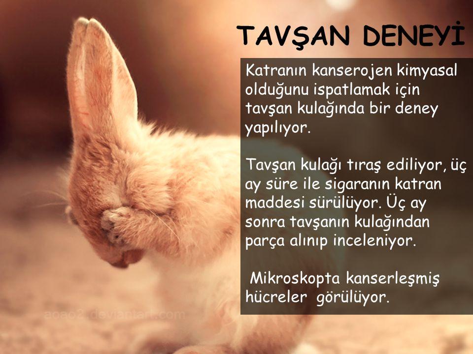 TAVŞAN DENEYİ Katranın kanserojen kimyasal olduğunu ispatlamak için tavşan kulağında bir deney yapılıyor. Tavşan kulağı tıraş ediliyor, üç ay süre ile