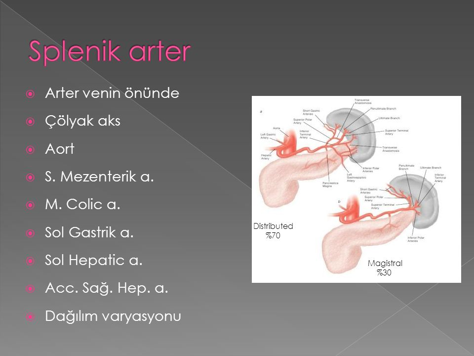 Major ligamentler  Gastrosplenik  Splenorenal Minor ligamentler  Splenofrenik  Splenokolik  Frenikokolik  Pankreatikosplenik