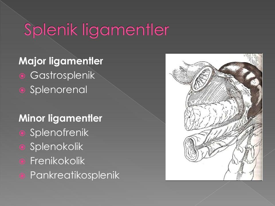 A.Splenik hilus B. Splenik damarlar çev. C. Splenokolik lig.