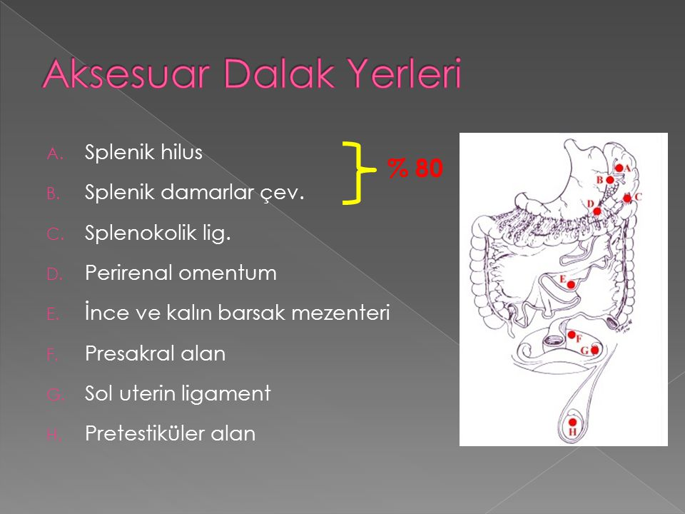 A. Splenik hilus B. Splenik damarlar çev. C. Splenokolik lig. D. Perirenal omentum E. İnce ve kalın barsak mezenteri F. Presakral alan G. Sol uterin l