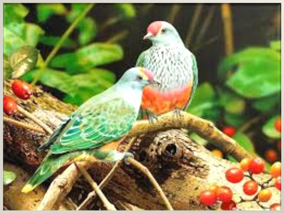 Kuşların evrimi Kuşlar, sürüngenler ile yakın akrabadırlar.