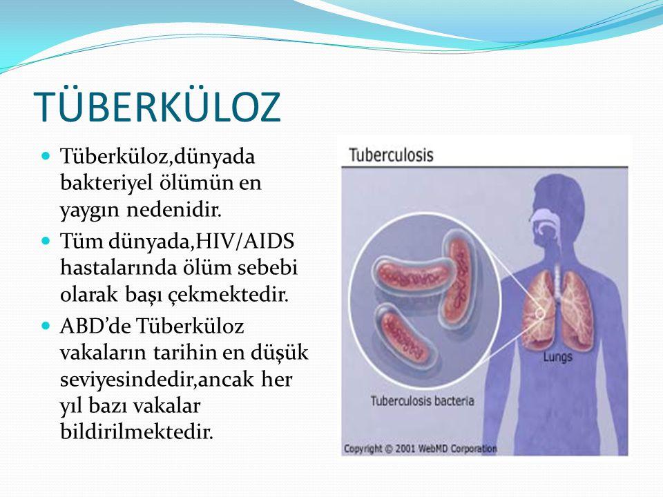 TÜBERKÜLOZ  Tüberküloz,dünyada bakteriyel ölümün en yaygın nedenidir.