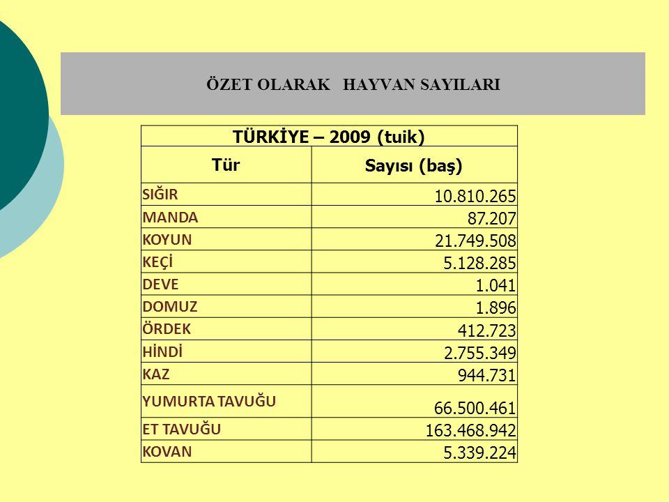 ÖZET OLARAK HAYVAN SAYILARI TÜRKİYE – 2009 (tuik) Tür Sayısı (baş) SIĞIR 10.810.265 MANDA 87.207 KOYUN 21.749.508 KEÇİ 5.128.285 DEVE 1.041 DOMUZ 1.89
