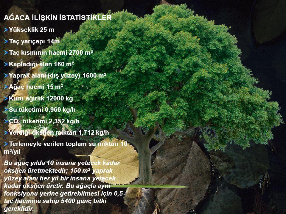 AĞACA İLİŞKİN İSTATİSTİKLER Yükseklik 25 m Taç yarıçapı 14m Taç kısmının hacmi 2700 m 3 Kapladığı alan 160 m 2 Yaprak alanı (dış yüzey) 1600 m 2 Ağaç