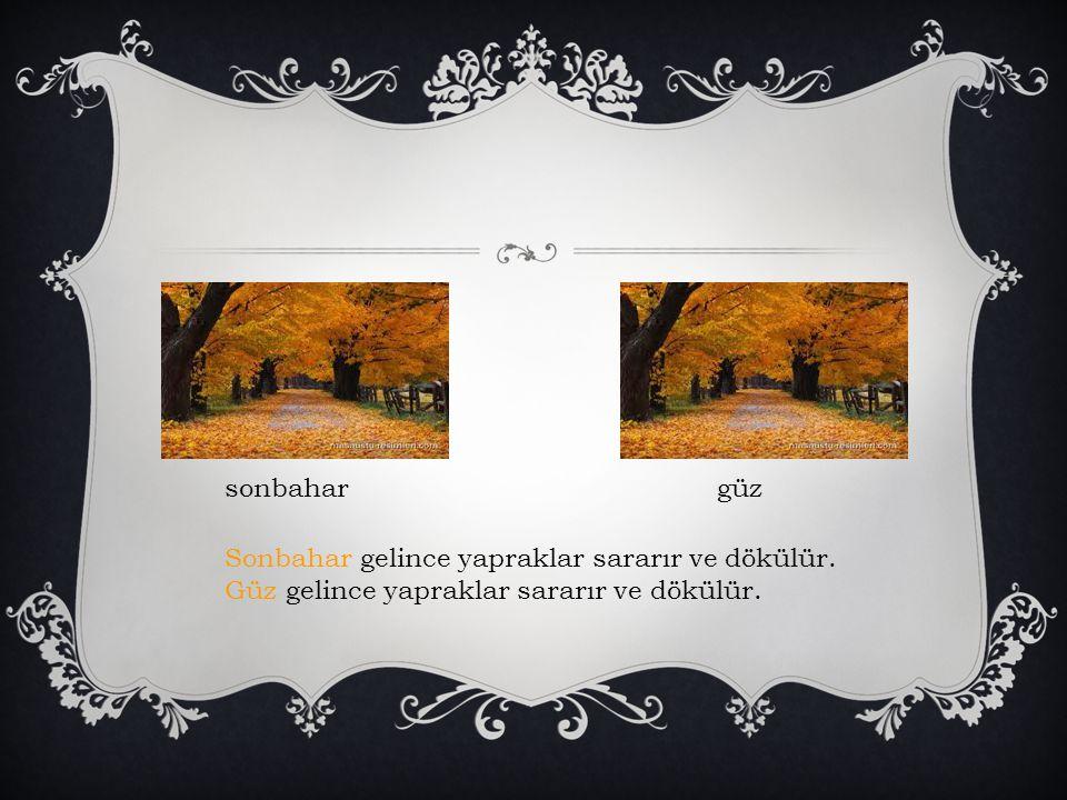 sonbahargüz Sonbahar gelince yapraklar sararır ve dökülür. Güz gelince yapraklar sararır ve dökülür.