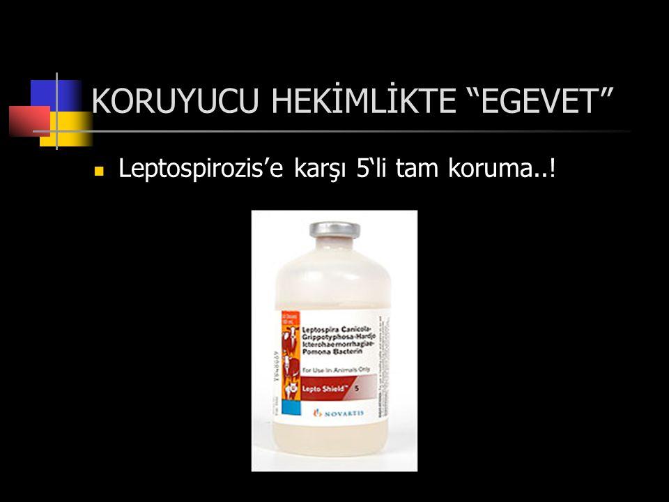 KORUYUCU HEKİMLİKTE EGEVET  Leptospirozis'e karşı 5'li tam koruma..!