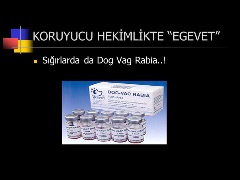 KORUYUCU HEKİMLİKTE EGEVET  Sığırlarda da Dog Vag Rabia..!