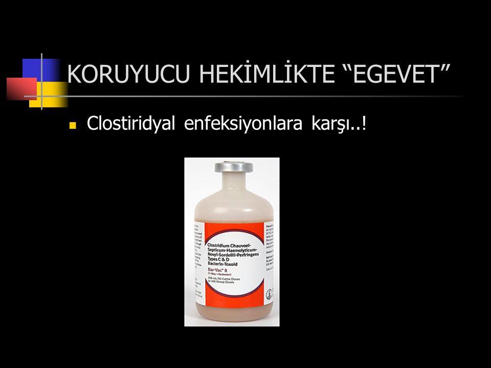KORUYUCU HEKİMLİKTE EGEVET  Clostiridyal enfeksiyonlara karşı..!