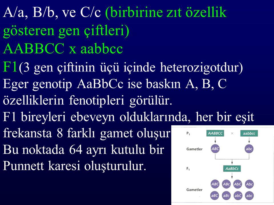 A/a, B/b, ve C/c (birbirine zıt özellik gösteren gen çiftleri) AABBCC x aabbcc F1 (3 gen çiftinin üçü içinde heterozigotdur) Eger genotip AaBbCc ise b